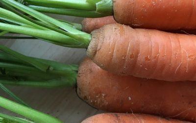 Erste Hilfe bei Durchfall – die Morosche Karottensuppe
