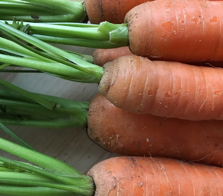 Tierheilpraxis Oberhessen, Morosche Karottensuppe, Erste Hilfe bei Durchfall